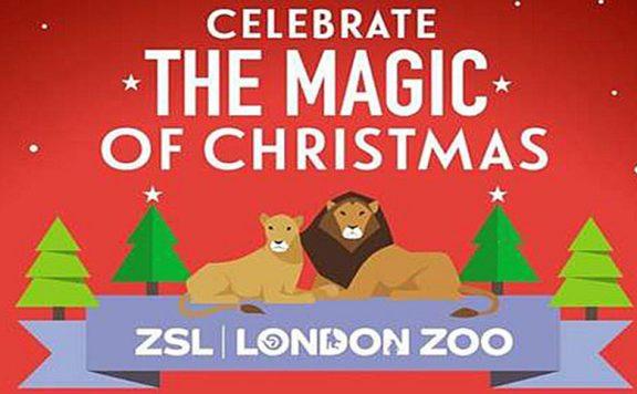 London Zoo at Christmas