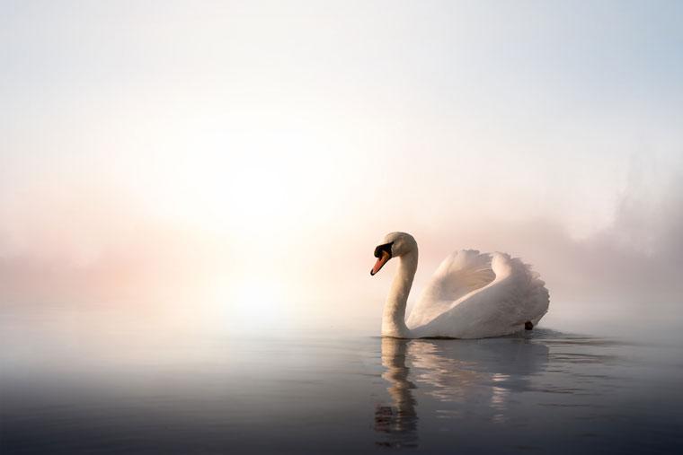 Swan Lake at Sadler's Wells Theatre